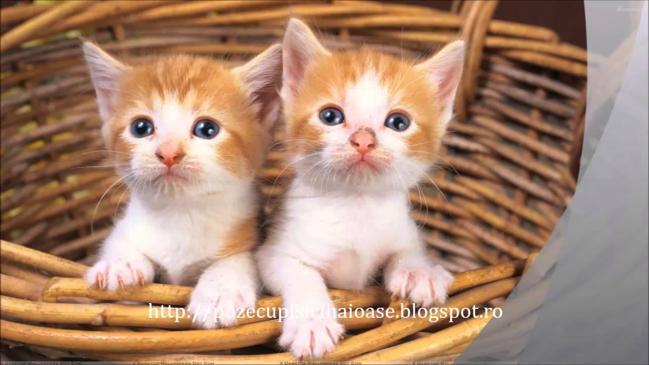 Poze Pisici Mici Youtube