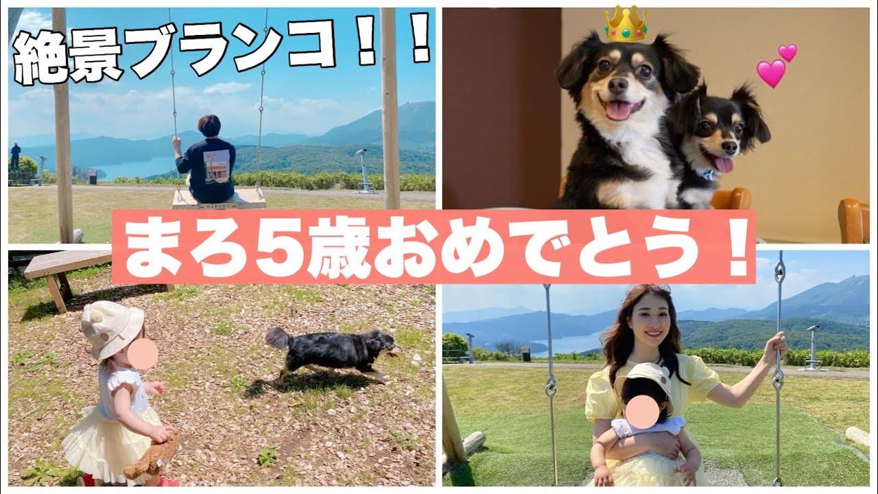 娘と愛犬のお祝いで箱根に行ったら山の上にブランコが!!【チワックス】【インスタ映え】