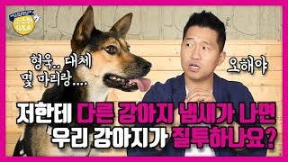 [Eng sub] If My Dog Smells Another Dog's Scent From Me, Will It Get Jealous?|Hunter Kang's Q&A