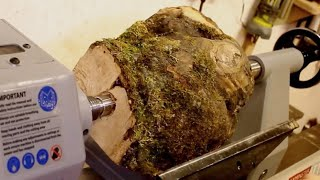 Woodturning - The Horse chestnut Burl Hollow Form