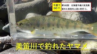 千歳でGO!! 第162回 北海道千歳川支流美笛川と尻別川上流に釣行 ①。ニジマス、ヤマメ、ブラウントラウトが釣れました。