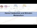 Heme Catabolism and Degradation Pathway - Biochemistry Lesson