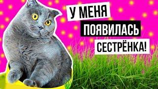 У МЕНЯ ПОЯВИЛАСЬ СЕСТРЕНКА | РЕАКЦИЯ КОШЕЧКИ БАТТЕРС