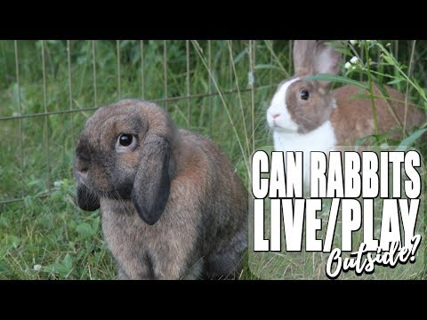 CAN RABBITS LIVE/PLAY OUTSIDE?