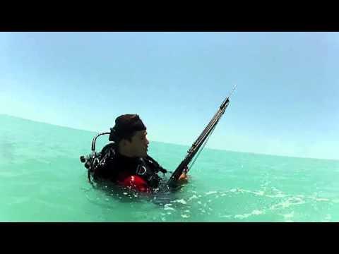 Scuba Diving Adventures