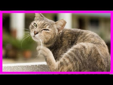 How To Tell If Your Cat Has Fleas: 8 Telltale Signs