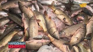Какой вред наносят браконьеры рыбному хозяйству Атырауской области
