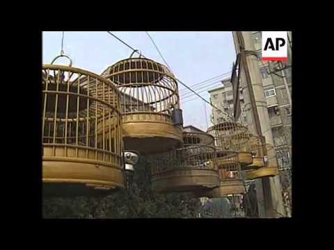 CHINA: BIRD MAN OF BEIJING
