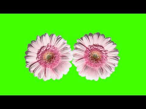 two creative flower animation green screen free royalty footage thumbnail