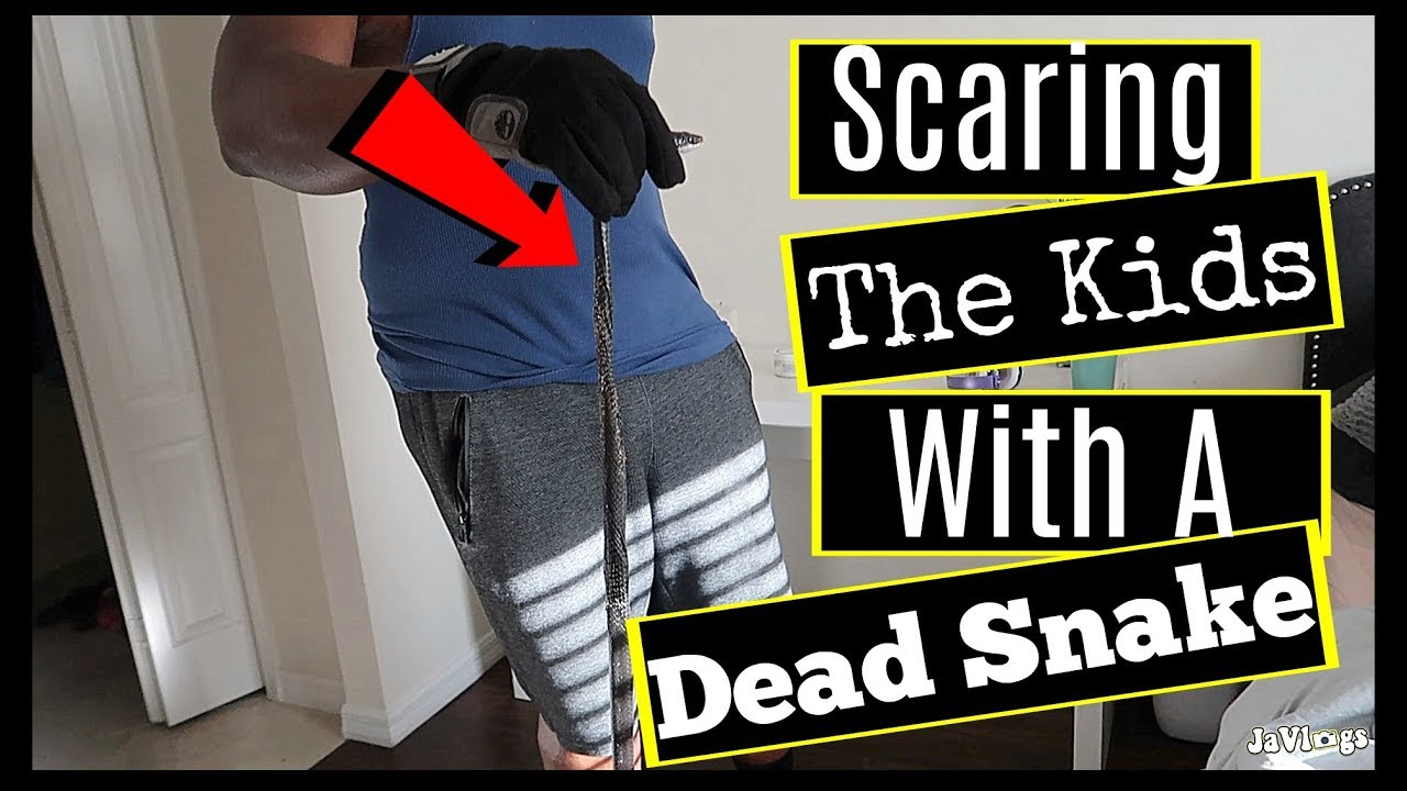 husband-killed-a-snake-then-tried-to-scare-the-kids-with-it-family-vlogs-javlogs