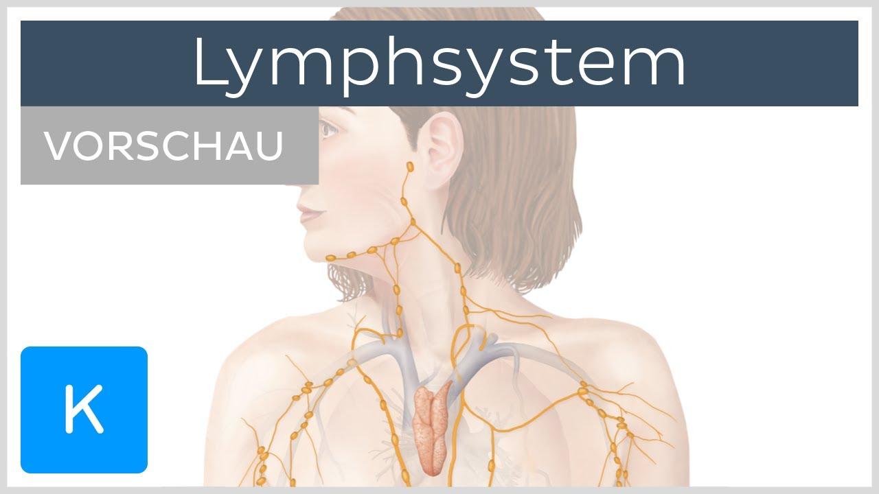 Einführung in das Lymphsystem (Vorschau)- Anatomie des Menschen |Kenhub