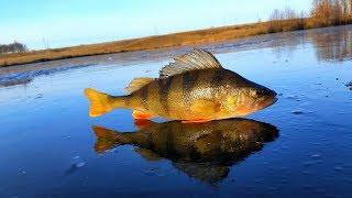 Перший лід, риболовля на окуня.