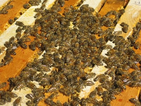 The Neonicotinoid View- EPA Comment Extension, Seeds For Bees and Industry PR Spin