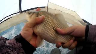 Рыбалка.крупный карась по последнему льду на мормышку. оз Благодатное