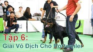 T6: Giải Vô Địch Chó Rottweiler /DogShow Việt Nam/NhamTuatTV - Dog in Vietnam