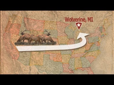 Celebrate 100 Years of Michigan's Wild Elk!