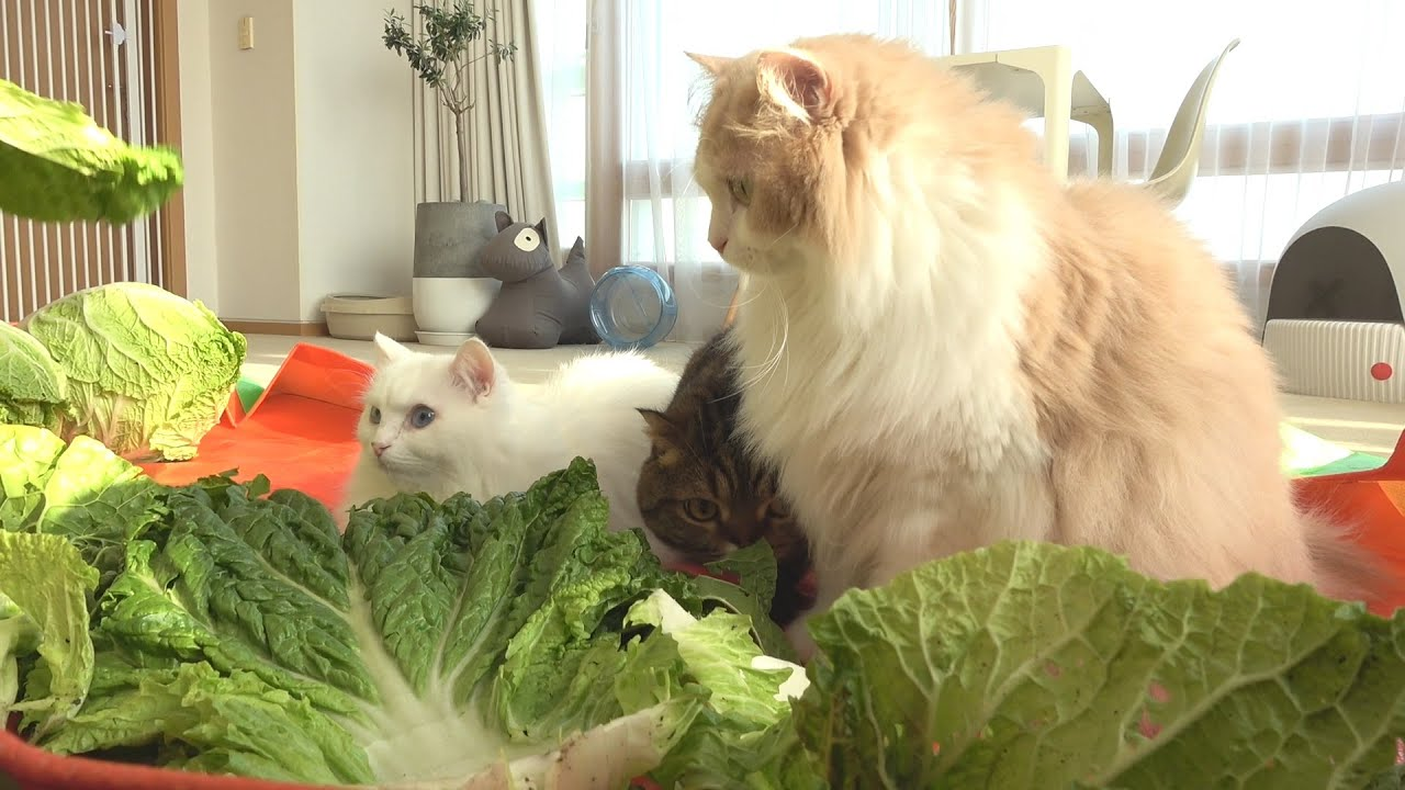 김장하는데 사랑스러운 고양이들이 몰려왔어요!