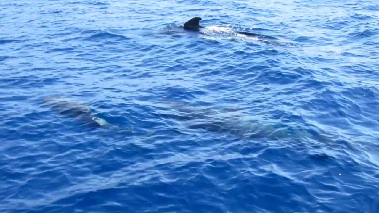 Diving with aqua marina tenerife march 2013 youtube - Aqua tenerife ...