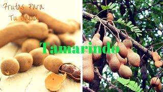 TAMARINDO: Laxante Natural Inmediato
