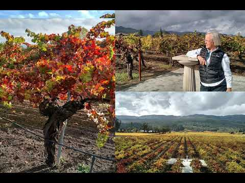 Cathy Corison and one of the world's top 100 wines