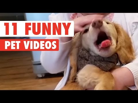 11 Funny Pet Videos Compilation 2016