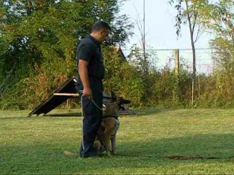 Belgian Malinois Police Dogs
