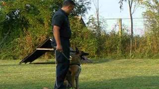 Malinois Police Dogs - Belgian Malinois Protection Training