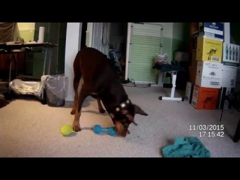 toys-for-large-dogs