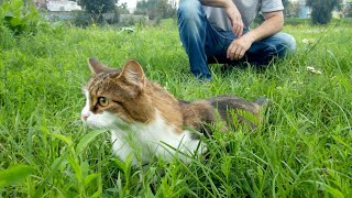 Кошка ВТОРОЙ раз на прогулке