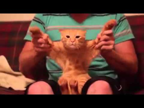 Drop The Bass Of Skrillex By Cat Youtube
