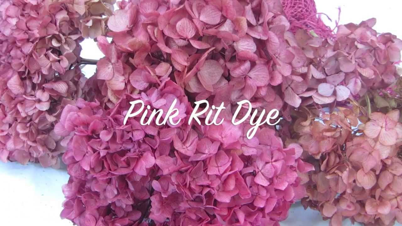 How To Dry Hydrangeas How To Color Hydrangeas Youtube
