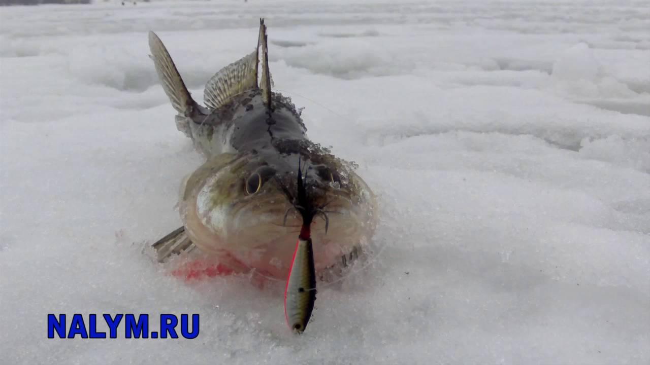 Ловля со льда на бокоплавы зимой