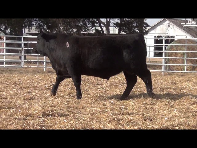 Express Ranches Lot 332