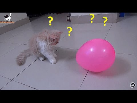 Kitten Playing With Balloons Cat Vs Balloons Meo Cover Home Youtube