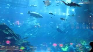 Гигантский аквариум в Дубаи(Гигантский аквариум в Дубаи., 2014-08-10T19:29:32.000Z)