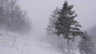 Snow Blizzard Relaxing Wind Sounds 2 Hours / Strong Winds Blowing Snow (Relax, Sleep, Study,...)
