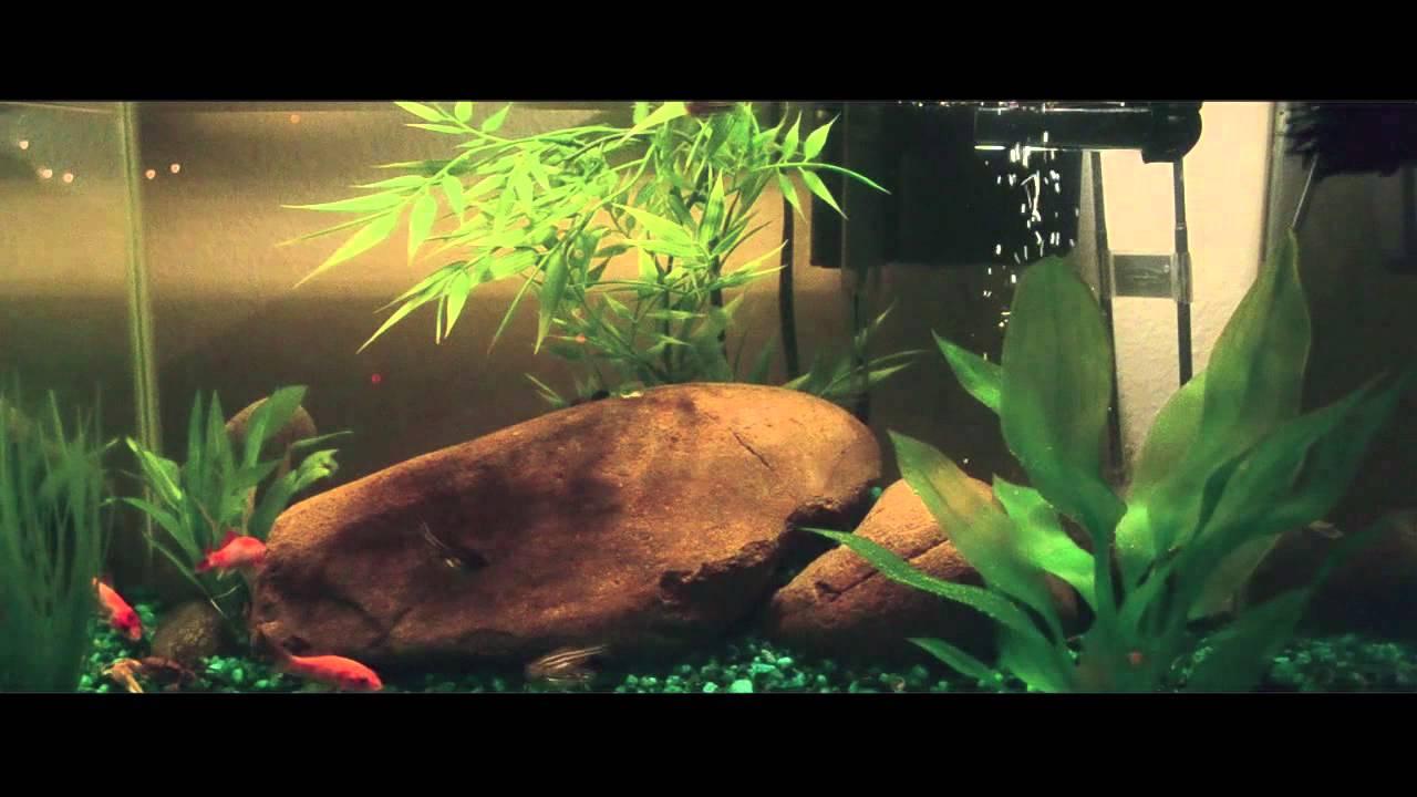 10 Gallon Community Tank Setup W Crowntail Betta Youtube