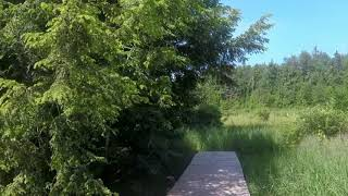 Virtual Hike: Big Beaver Bog at Poestenkill Community Forest