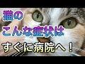 【猫の病気】この症状はすぐに動物病院へ!様子を見ないでほしい症状とは。