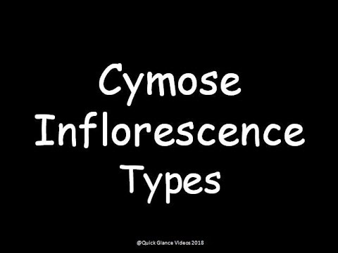 Types of Cymose Inflorescence