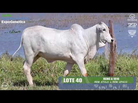 LOTE 40 - Leilão Genética Aditiva ExpoGenética 2019