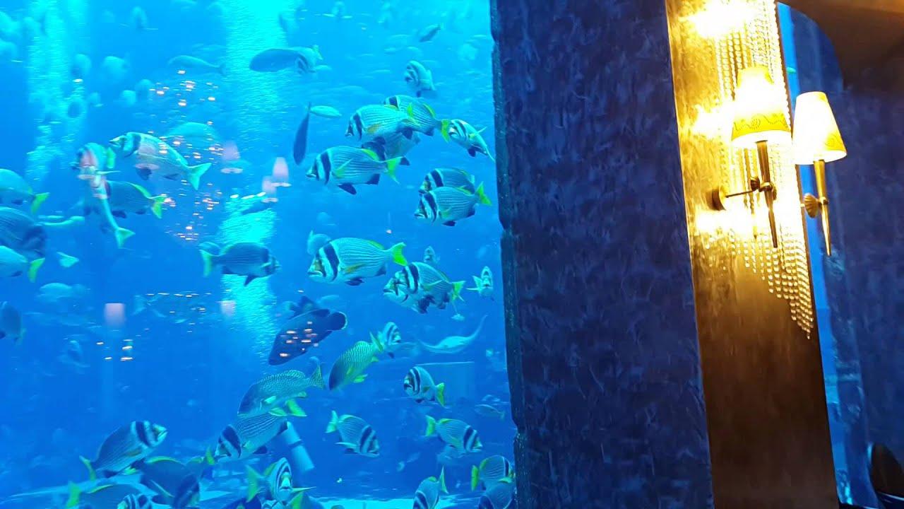Underwater Restaurant Atlantis Atlantis Hotel Aquariu...