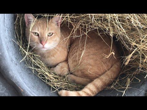 THE CAT NEST