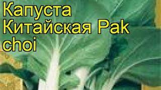 Капуста китайская Пак чой. Краткий обзор, описание характеристик, где купить семена Pak choi