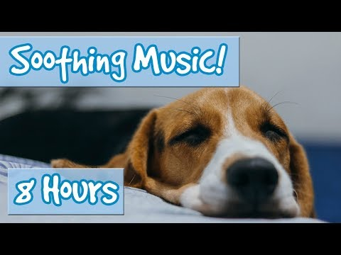 Calm Your Dog - Classical Style music to Sooth Anxious Dogs - Nature sounds for Dogs, Stop Barking?