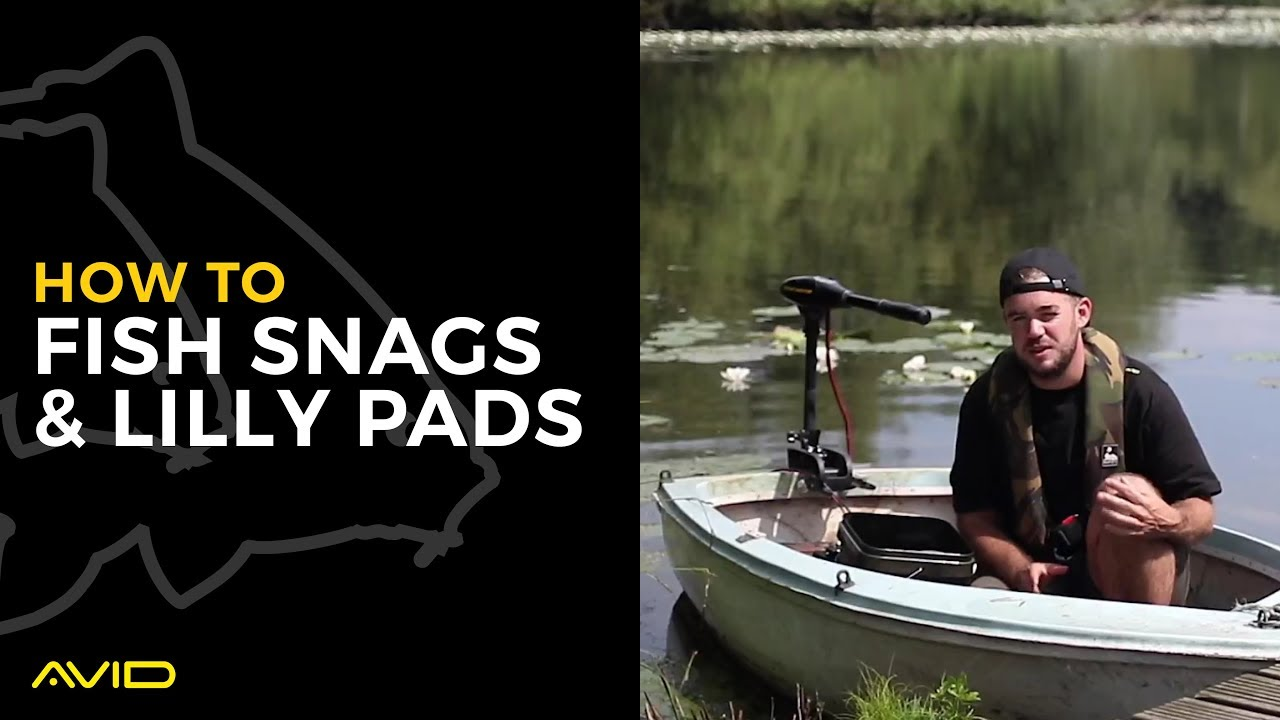 Download AVID CARP- How to Fish Snags & Lilly Pads
