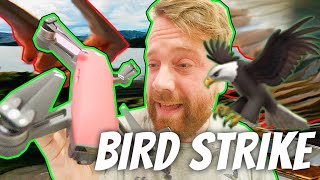 A bird ATTACKED my DJI Spark Drone