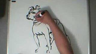 Freestyle Art : American Pit Bull Terrier