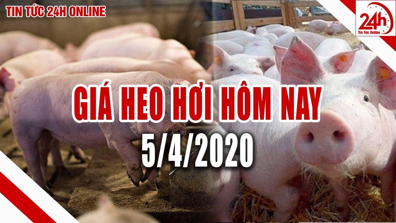 Giá heo hơi ngày hôm nay 5/4/2020 | Giá lợn hơi Miền Bắc cao nhất nước | Tin tức 24h
