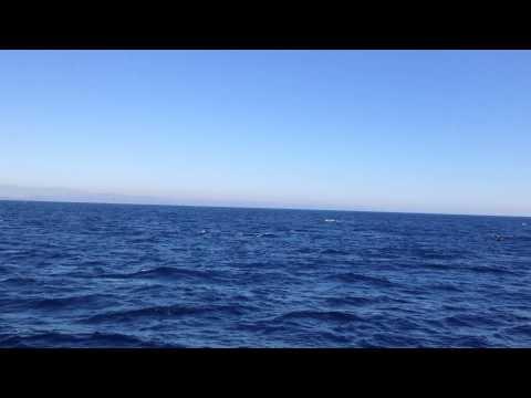 Blue Whale - Pacific Ocean - Long Beach, California